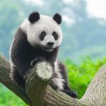 Google Panda 4.0: continua la lotta allo spam a favore dei contenuti di qualità